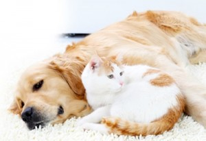 pet-stain-removal-kennesaw-400px